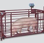 ВП-ЖК Весы платформенные с подвесной клеткой для взвешивания животных